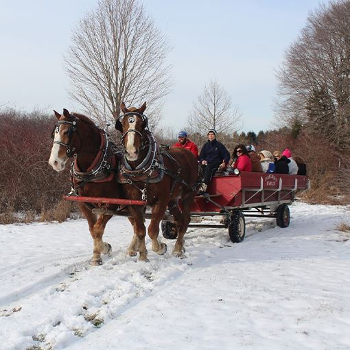Horse drawn carriage ride in winter
